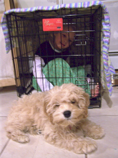 amber-in-cage.jpg